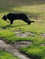 The neighborhood black Cat sees something interesting.